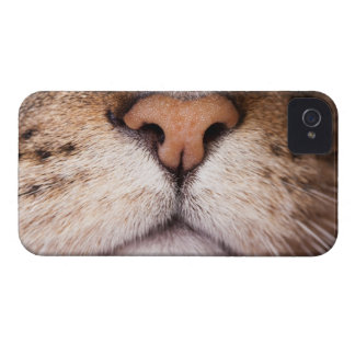 A macro image of a cat's nose and mouth. Case-Mate iPhone 4 case