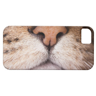 A macro image of a cat's nose and mouth. iPhone 5 cases