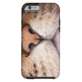 A macro image of a cat's nose and mouth. tough iPhone 6 case