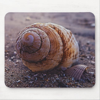 A Macro View Of A Spiral Shell Mouse Mat