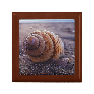 A Macro View Of A Spiral Shell Small Square Gift Box