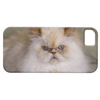 A mad, upset, reclining Flame Point Himalayan iPhone 5 Case