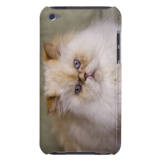 A mad, upset, reclining Flame Point Himalayan iPod Touch Case