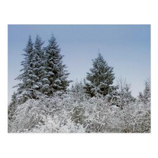 A Maine Winter 4 Postcard