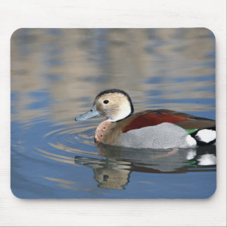 A Male Blue Billed Ringed Teal Swims in a pond Mouse Pad