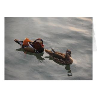 A Male Female pair of Mandrain Ducks Swimming Note Card