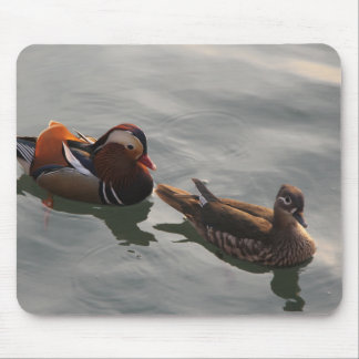 A Male Female pair of Mandrain Ducks Swimming Mouse Pad