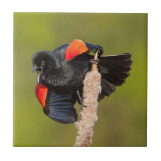 A Male Red-Winged Bird 2 Tile