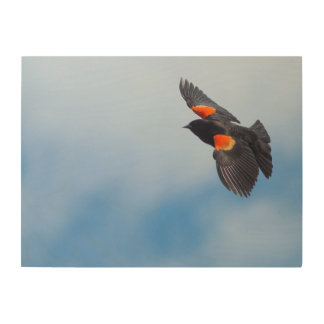 A Male Red-Winged Bird Wood Canvases