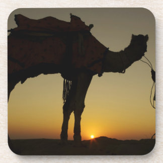a man and his camel Silhouetted at sunset on the Coaster