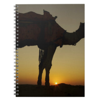 a man and his camel Silhouetted at sunset on the Notebook