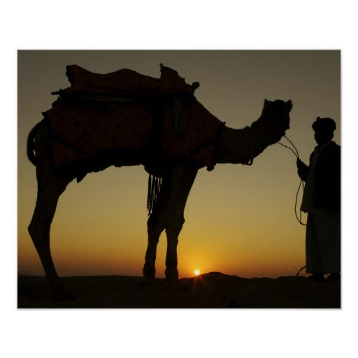 a man and his camel Silhouetted at sunset on the Posters