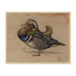 A Mandarin drake by Eugene Delacroix Postcard