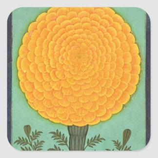 A Marigold, from the Small Clive Album (w/c on pap Square Sticker