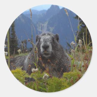 A marmot in Paradise in Mount Rainier National Par Classic Round Sticker
