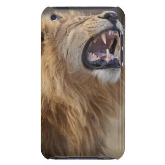 A mature male lion (Panthera leo) in the Savuti Barely There iPod Covers