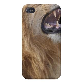 A mature male lion (Panthera leo) in the Savuti iPhone 4 Cases