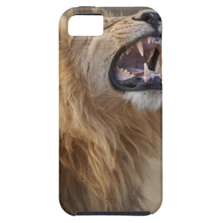 A mature male lion (Panthera leo) in the Savuti iPhone 5 Case