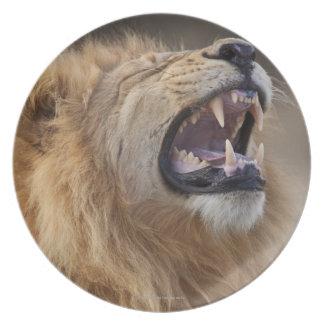 A mature male lion (Panthera leo) in the Savuti Plate