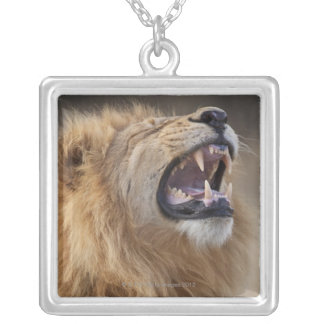 A mature male lion (Panthera leo) in the Savuti Silver Plated Necklace