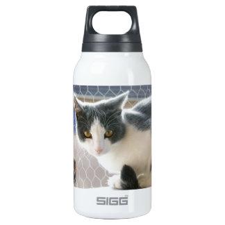 A Max And Mantle Bi Colour Cat