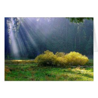 A meadow in the sun. card