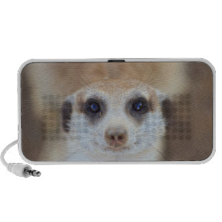 A Meerkat looking up at the camera Travelling Speakers
