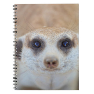 A Meerkat looking up at the camera Spiral Notebook