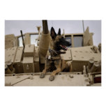 A military working dog sits on a M2A3