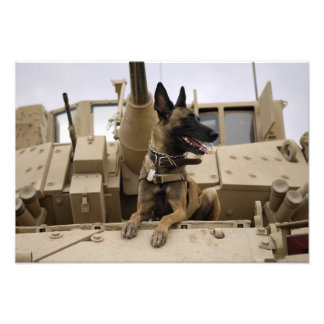A military working dog sits on a M2A3 Photograph
