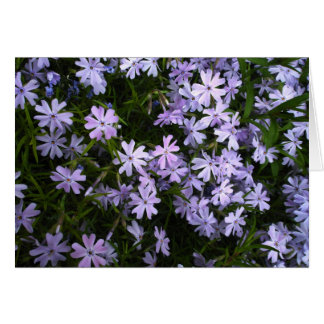 a minature field... all to yourself (Glade Phlox) Greeting Card