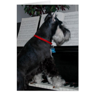 A miniature Schnauzer at the piano Greeting Card