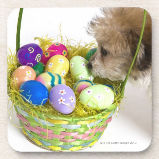 A mixed breed puppy sniffing at an Easter basket Coaster