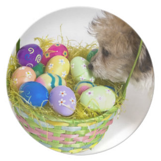 A mixed breed puppy sniffing at an Easter basket Plate
