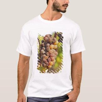 A moldy Semillon grape bunch at Ch Raymond Lafon T-Shirt
