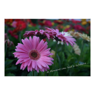 A Moment Pink Gerber Daisies Imaginative Imagery Poster