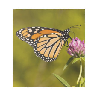 A monarch butterfly, Danaus plexippus, on clover Notepad