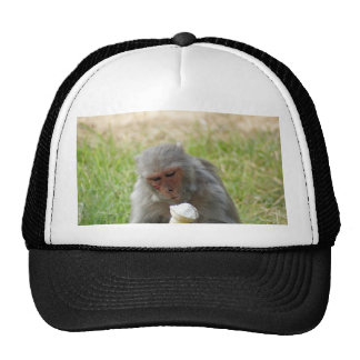 A monkey enjoying an ice cream mesh hats