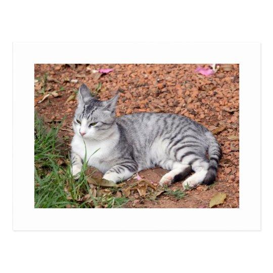 A Moon Cat PostCard