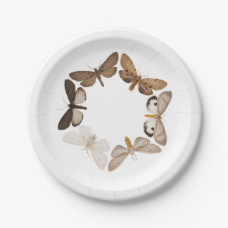 A moth plate 7 inch paper plate