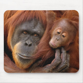 A mother and baby orangutan share a hug. mouse mat