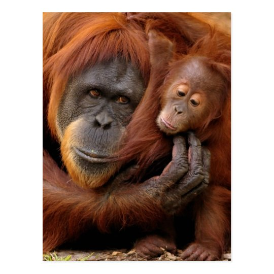 A mother and baby orangutan share a hug.