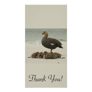 A Mother Magellan Goose With Her Young Custom Photo Card