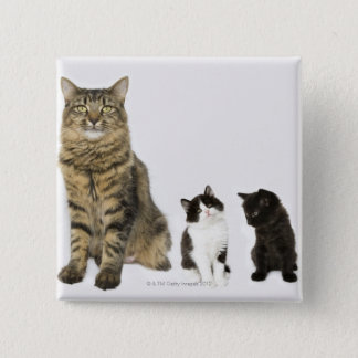 A mother with her four kittens all sitting 15 cm square badge