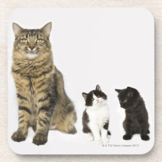 A mother with her four kittens all sitting coaster