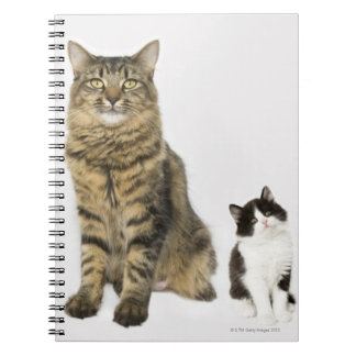 A mother with her four kittens all sitting notebooks