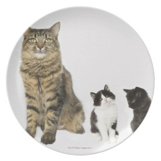 A mother with her four kittens all sitting plate