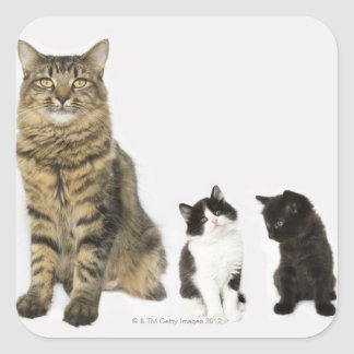 A mother with her four kittens all sitting square sticker