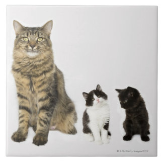 A mother with her four kittens all sitting tile
