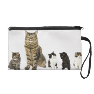 A mother with her four kittens all sitting wristlet clutch